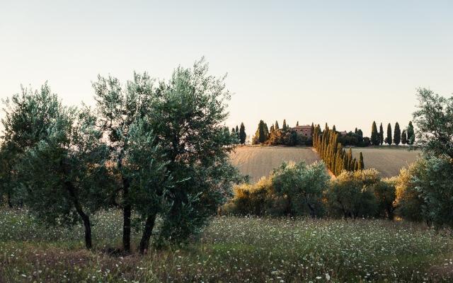 Toskana (20 von 61)