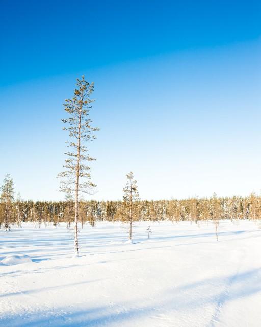Finland_Lapland_Hut_Mushing-2191