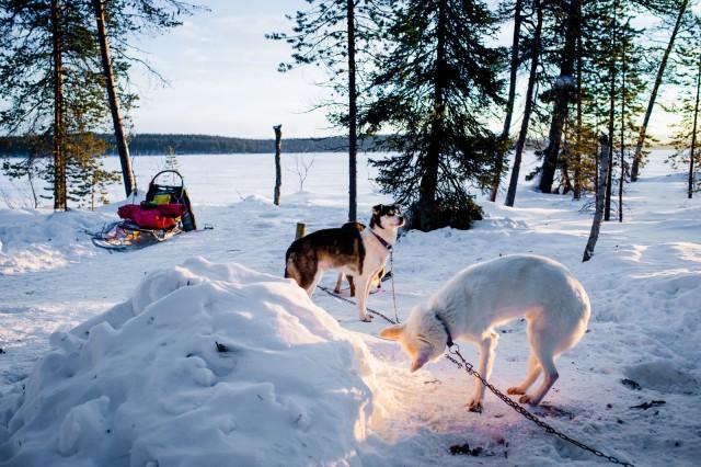 Finland_Lapland_Hut_Mushing-2380