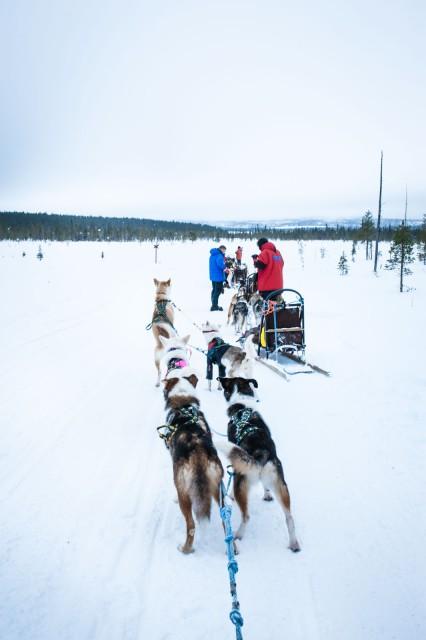 Finland_Lapland_Hut_Mushing-2591