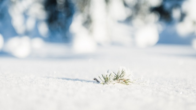 finland_lapland_snowshoe_linkukero_hiking-2793