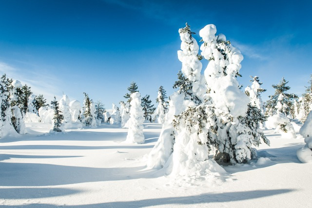 finland_lapland_snowshoe_linkukero_hiking-2807