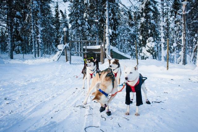 finnland-lappland--2