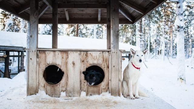 finnland-lappland-2160