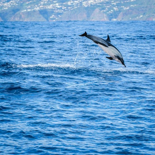madeira_whalewatching_calheta_lobosonda-6252